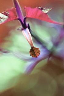 besonnen von © Ivonne Wentzler