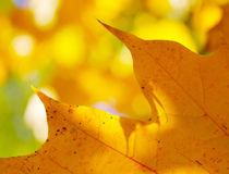 Herbstlicht von M. Ziehr