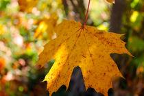 Herbstflackern von M. Ziehr