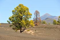 Am El Teide auf Teneriffa by ralf werner froelich