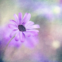 purple and green by Priska  Wettstein