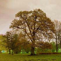The Great Oak von Tanel Teemusk