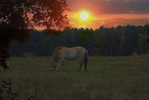 Sunset Wildness by Shiva B.