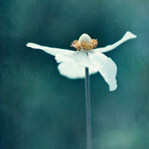 'If Petals were wings...' von Priska  Wettstein