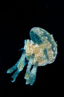 Jellyfish von Michael Moxter
