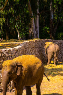Elephants eating von slavamalai