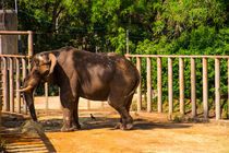 Elephant eating von slavamalai