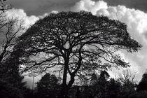 Silhouette von Colin Metcalf