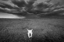 Skull by Schoo Flemming