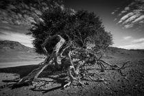 desert tree von Schoo Flemming