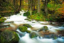Autumn stream von Maciej Markiewicz