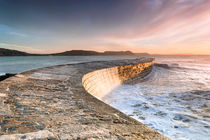 Sunkissed Cobb at Lyme Regis by Chris Frost