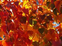 Rainbow-autumn-tree