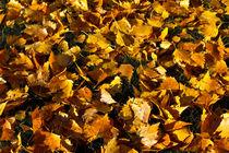 Golden Autumn Leaves by David Pyatt