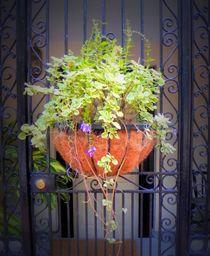 Planter with Fern von O.L.Sanders Photography