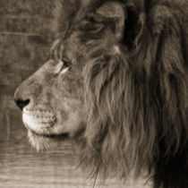 African King by Roger Butler