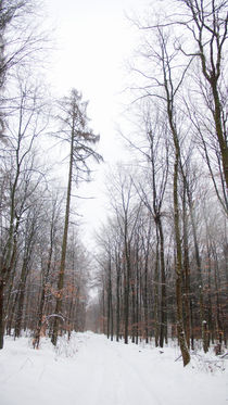 Snow in a forest, Luxembourg by Christian Hansen