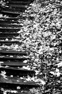 Verschlungene Pfade von Bastian  Kienitz