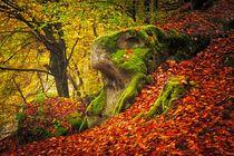 Autumn Forrest by Maciej Markiewicz