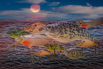 Migration of the Crankbaits by Randall Nyhof