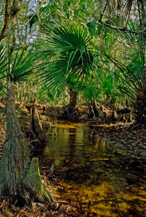 Snell Creek. Osceola County Florida by chris kusik