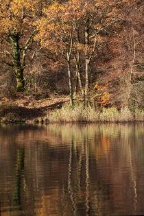 Golden Pond - 1 by David Tinsley