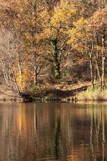 Golden Pond -2 by David Tinsley