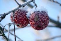 Geeiste Schneeäpfel von Heidrun Lutz