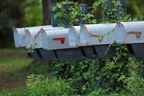 Ivy Covered Mailboxes by Louise Heusinkveld