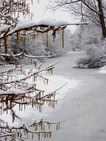 Catkins on Ice by Juergen Seidt