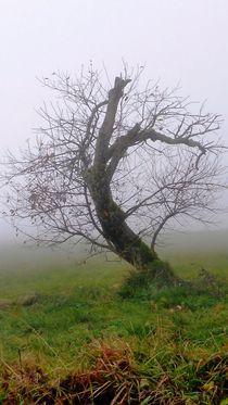 'Haunted Fairyland' von Juergen Seidt