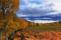 Misty day in the Cairngorms II by Louise Heusinkveld