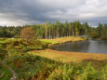 Tarn Hows in autumn, Cumbria by Louise Heusinkveld