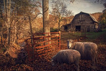 Pair of Sheep by William Schmid