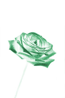 Green Rose by Les Mcluckie