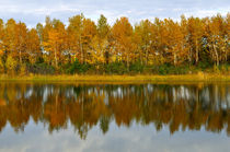 Autumn forest reflected in the water von larisa-koshkina