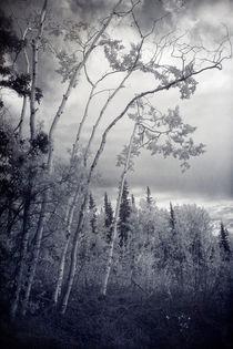 lonesome woods von Priska  Wettstein