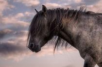 Paard72134retry-vig-flat2