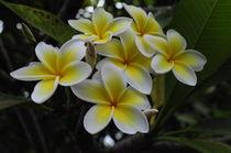 Yellow beauty 2 by Florentina Necunoscutu de Carvalho