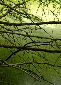 Tree-7046359green-mystery