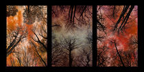 Tree Canopy Triptych by David Pringle