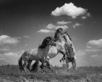 Henri-ton-2009-dancing-horses