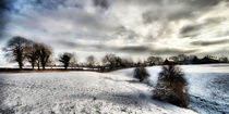 Cheshire Winter by Oliver Wood
