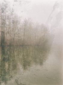 Foggy Day by Maciej Markiewicz