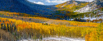 Rocky Mountain Fall von Barbara Magnuson & Larry Kimball