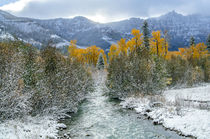 Autumn in the Uncompahgre Mountains von Barbara Magnuson & Larry Kimball