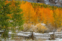 Rocky Mountain Autumn by Barbara Magnuson & Larry Kimball