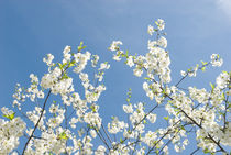 Spring flowers von Tobiasz Stefaniak