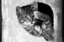 Katzenchaos von Lena Reiner