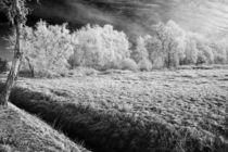 Frosty by Licht und Mystik des Nordens